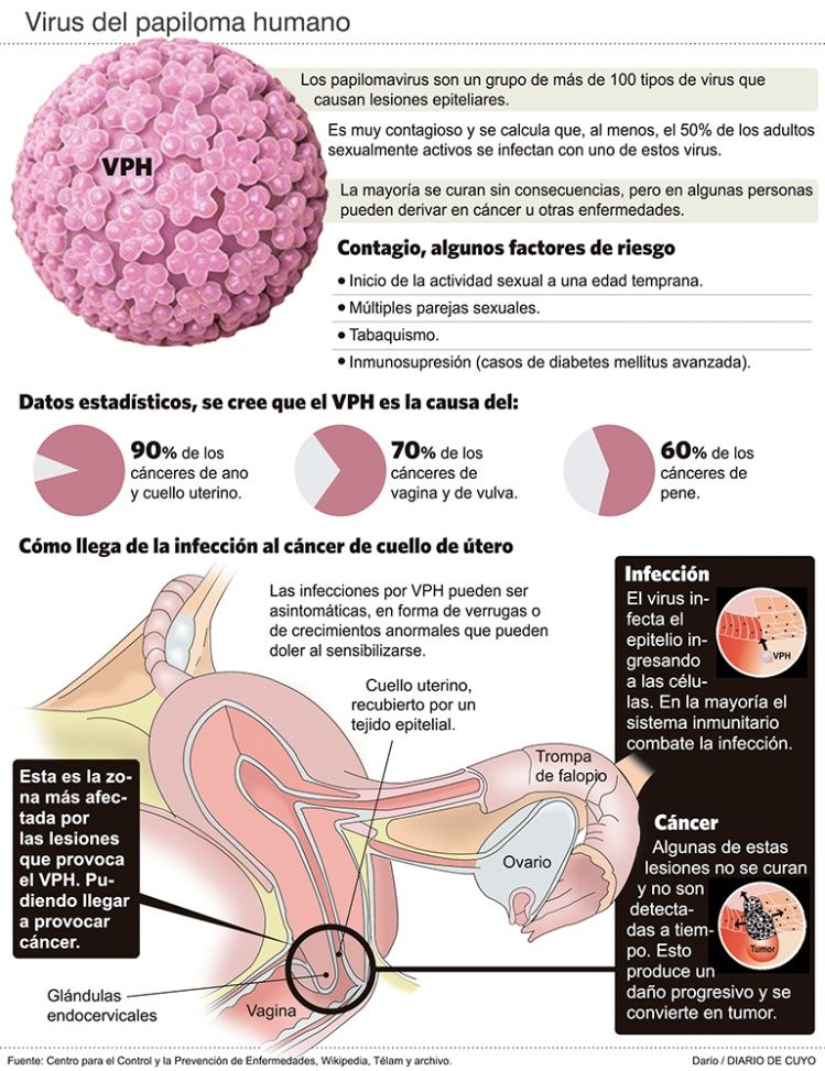 positivo al test del papilloma virus helmintox instrukcija