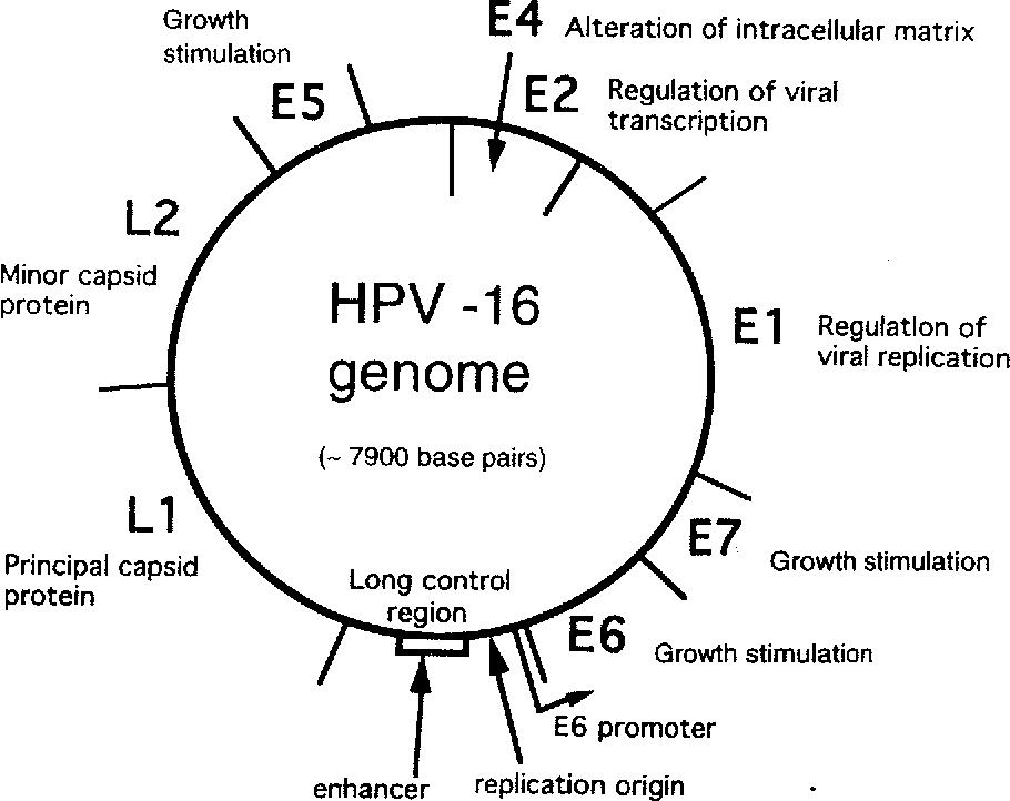 ovarian cancer how to prevent high risk type human papillomavirus