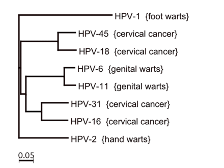 human papillomavirus medscape