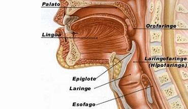 cancerul laringian simptome si metode de tratament tratament detoxifiere ficat
