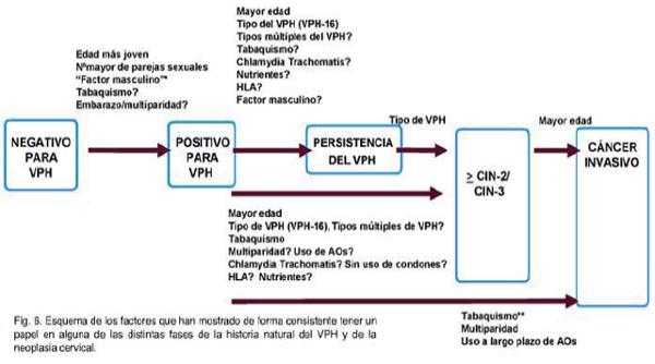 virus del papiloma humano en que tiempo se manifiesta papiloma virus vaccino uomo