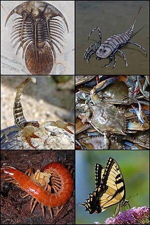 animale parazite exemple