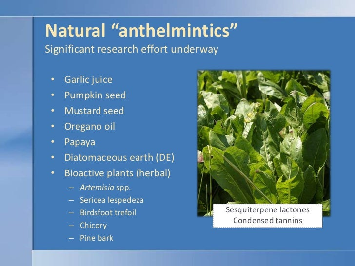 anthelmintic activity of herbal plants hpv transmission homme femme