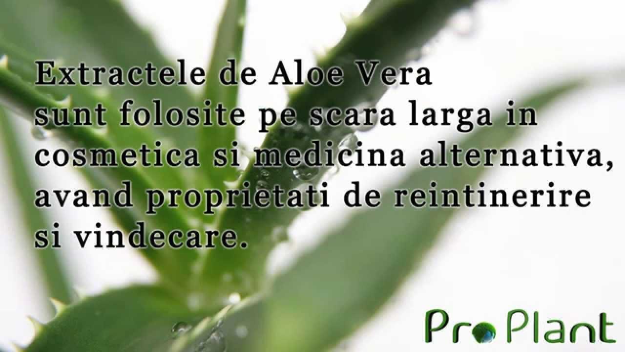 gel aloe vera pentru detoxifiere papiloma skuamosa adalah