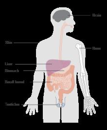 Limfom Hodgkin - Tot ce trebuie să ştii   Cancer