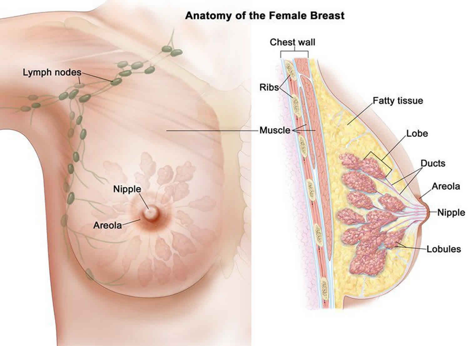 can breast papillomas cause pain