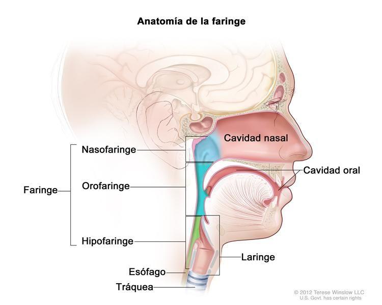 cancer mamar tratament medicamentos papillomavirus humain et vih