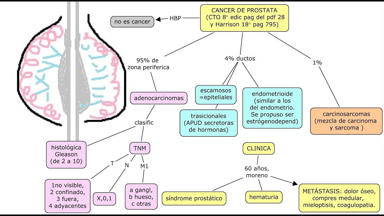 cancer de prostata fisiopatologia