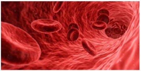 cancer no hodgkin etapa 4 crevni paraziti kod male dece