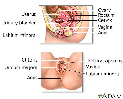 cancere genitale virusi contagiosi
