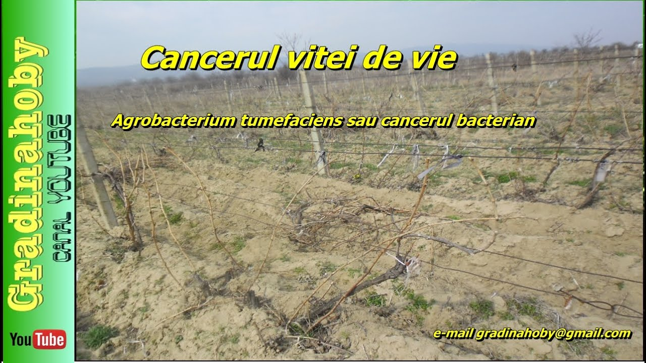 cancerul bacterian la mar