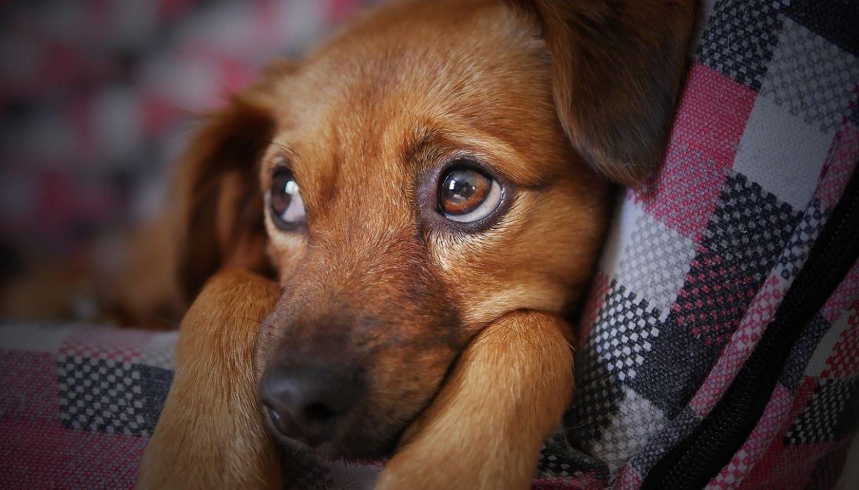 papilloma virus cani contagioso per uomo