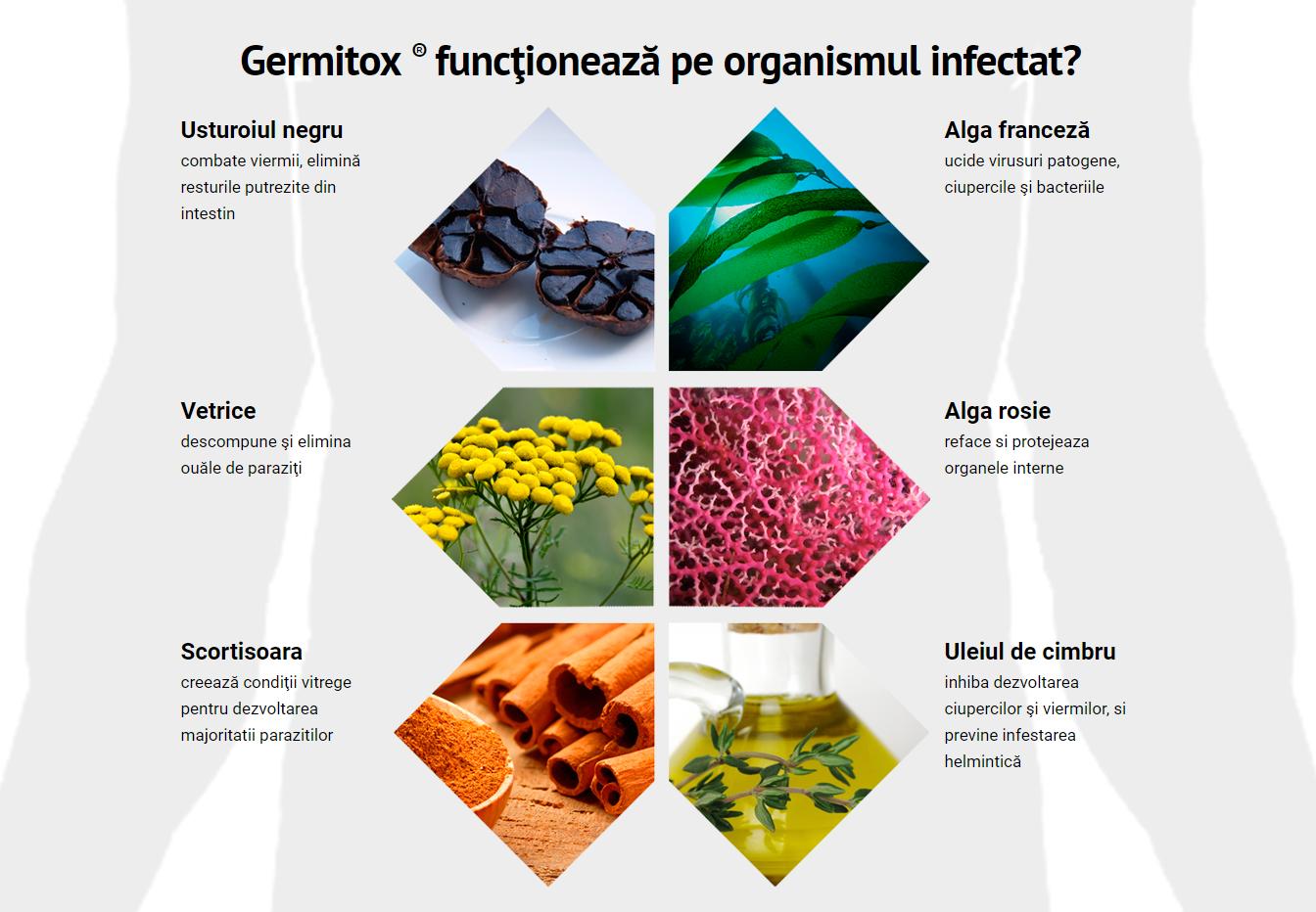 Paraziți în ficatul uman: simptome și tratament - Alimente