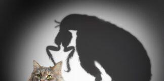 crevni paraziti kod macaka