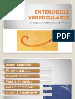 Enterobius vermicularis filo. Enterobiasis Rospotrebnadzor