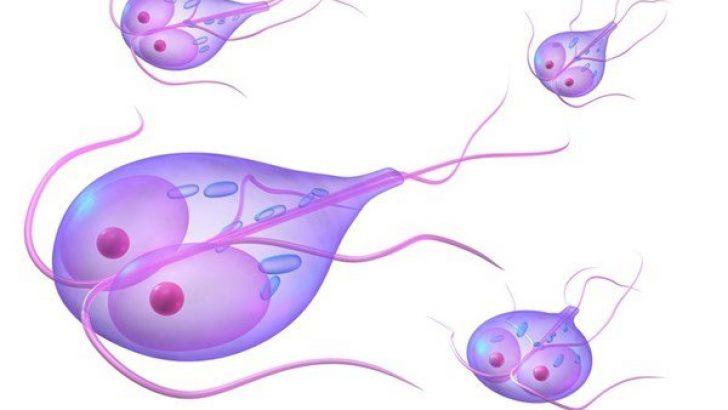hpv e cancer de prostata