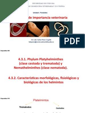 oxiuros caracteristicas morfologicas cancer pulmonar temperatura