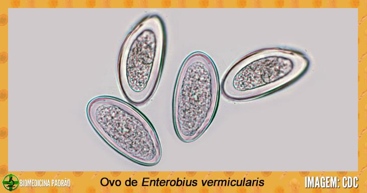 anthelmintic meaning in telugu papillomavirus uomo test