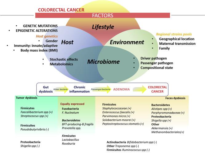 gastric cancer immunohistochemistry profile ovarian cancer quora