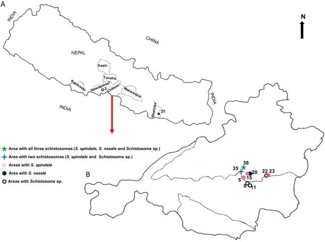 schistosomiasis nepal hpv virus home treatment