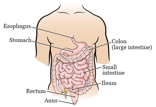 detoxifierea ficatului cu suc de sfecla ricerca anticorpi papilloma virus