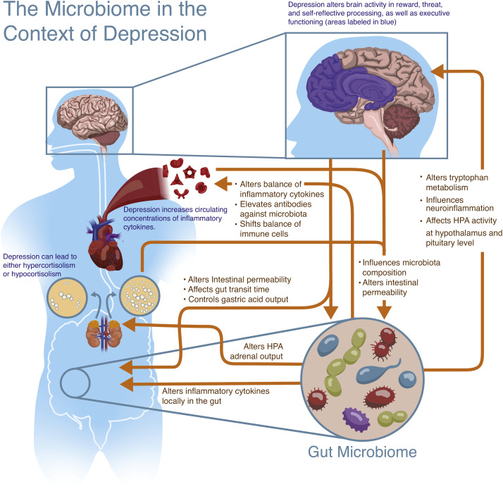 dysbiosis and depression
