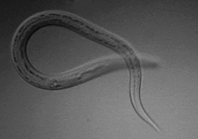 papiloma humano en la boca tiene cura hpv virus man keel