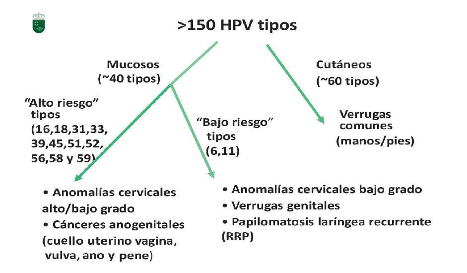 virus del papiloma humano tipos