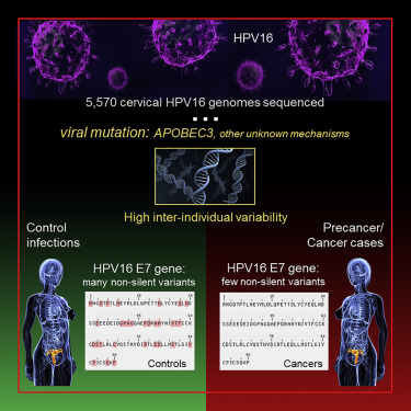 human papillomavirus infection variants