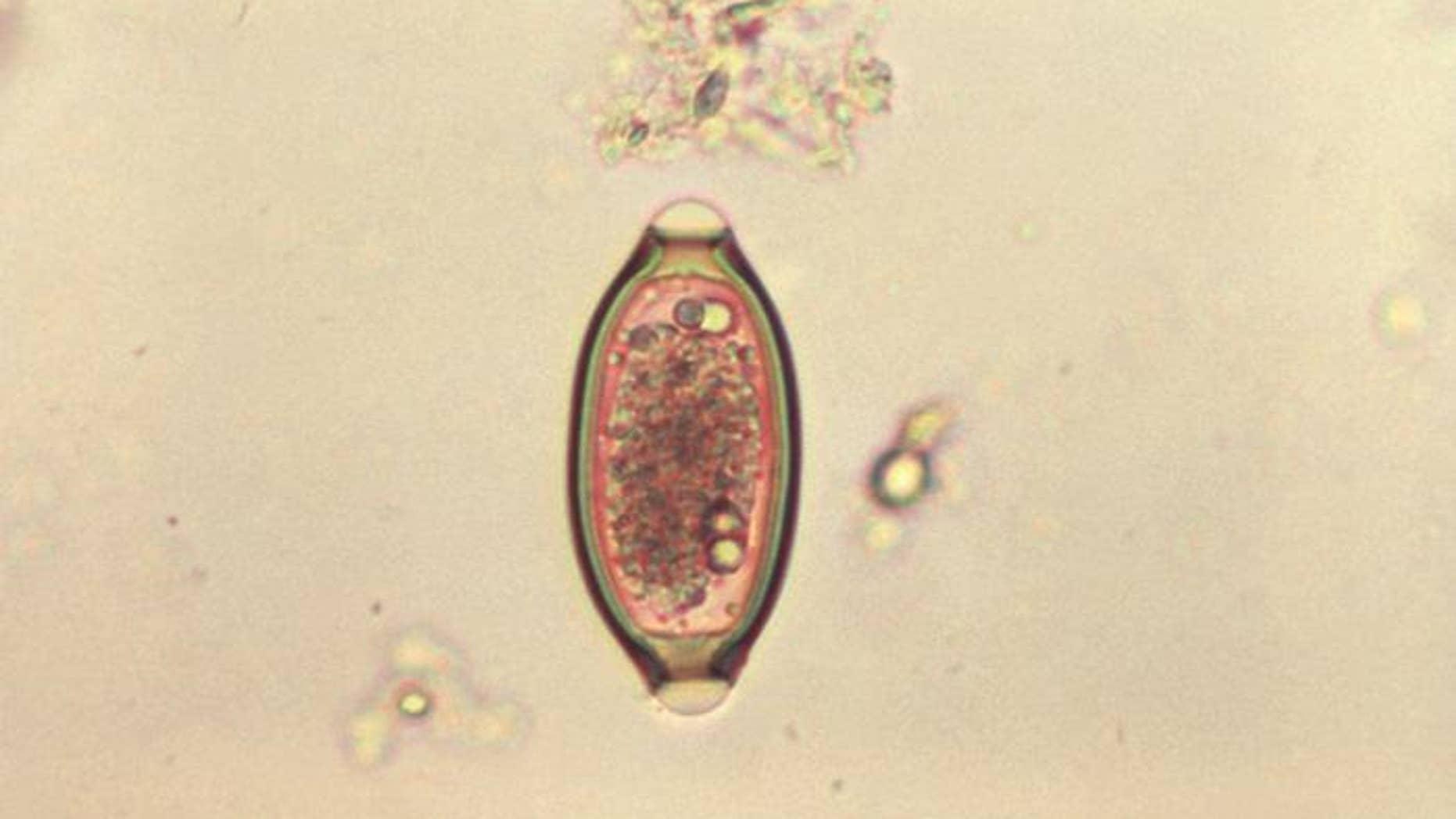 papiloma palpebral perros hpv impfung im erwachsenenalter