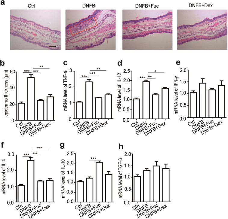 helmintic dex tratamiento para virus papiloma en hombres