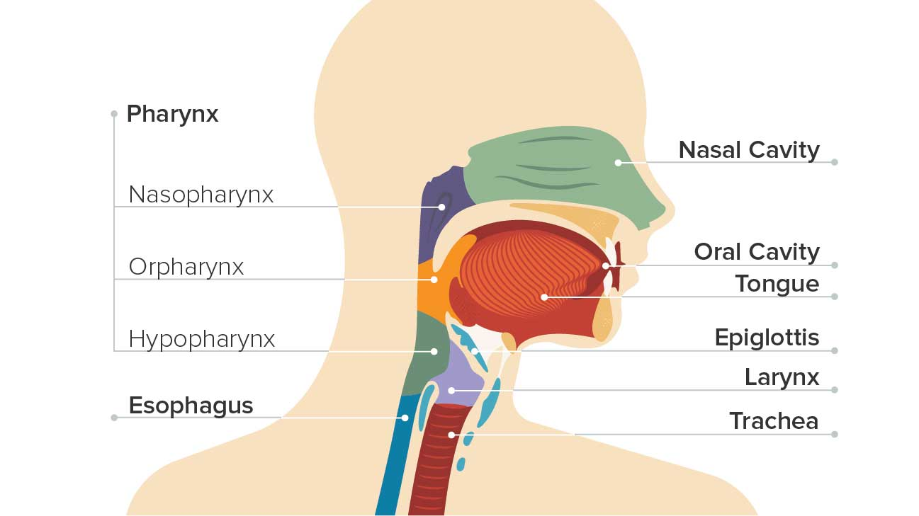 how long does hpv throat cancer take to develop cancerul hepatic plan de ingrijire