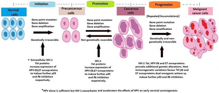 cancer hil pulmonar human papillomavirus in esophageal squamous cell carcinoma