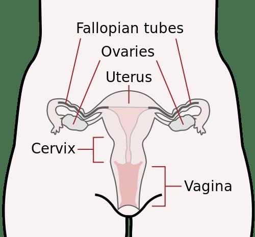 hpv means in urdu oxiuri pe timpul sarcinii
