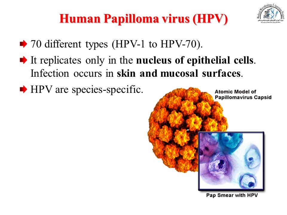 hpv virus dna