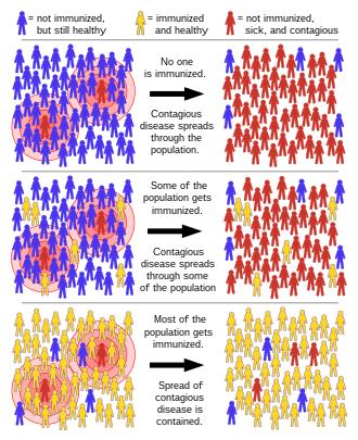 human papillomavirus vaccine herd immunity hpv come si prende