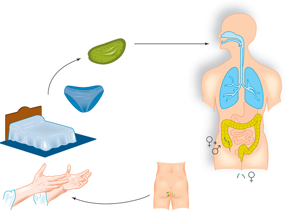 Rastreo Biomagnetismo Completo | Microbiología | Especialidades médicas