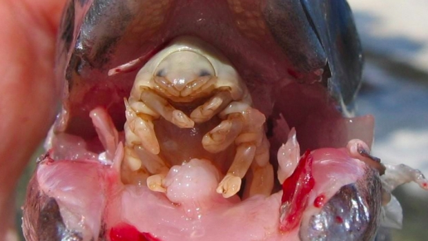 paraziti v tele obrazky