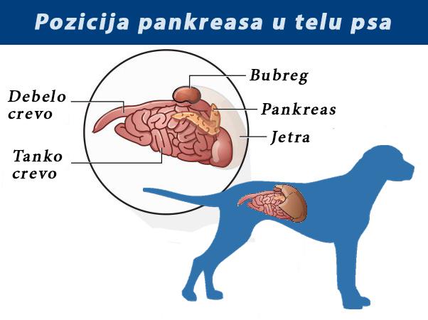 srcani paraziti kod pasa papiloma virus humano en bebes
