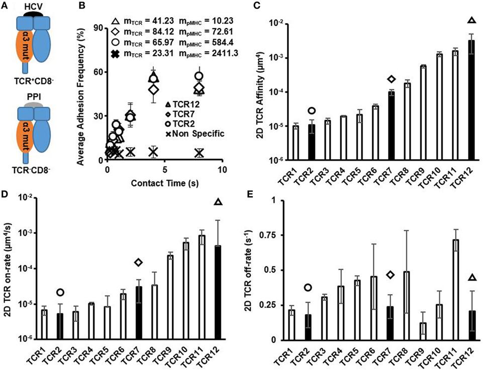 VirusBlock Forte, 20 capsule, Biopol - pentru imunitate | pret