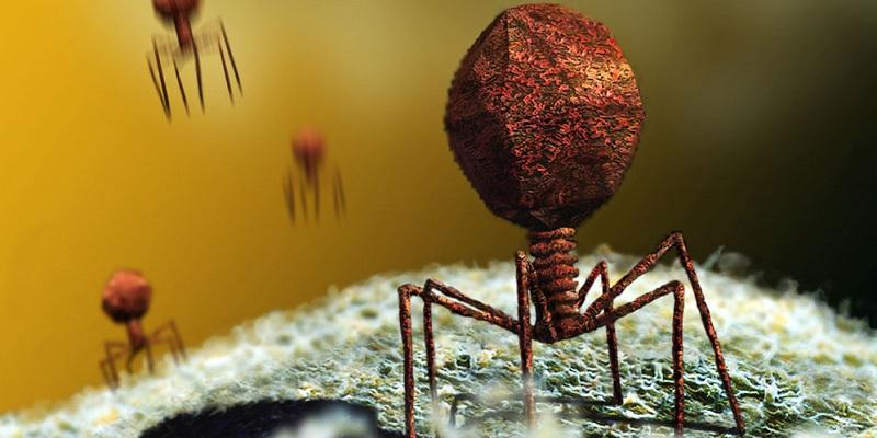 Ce este gastroenterita și ce viruși determină apariția ei? | Domestos