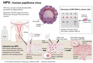 molluscum papiloma virus
