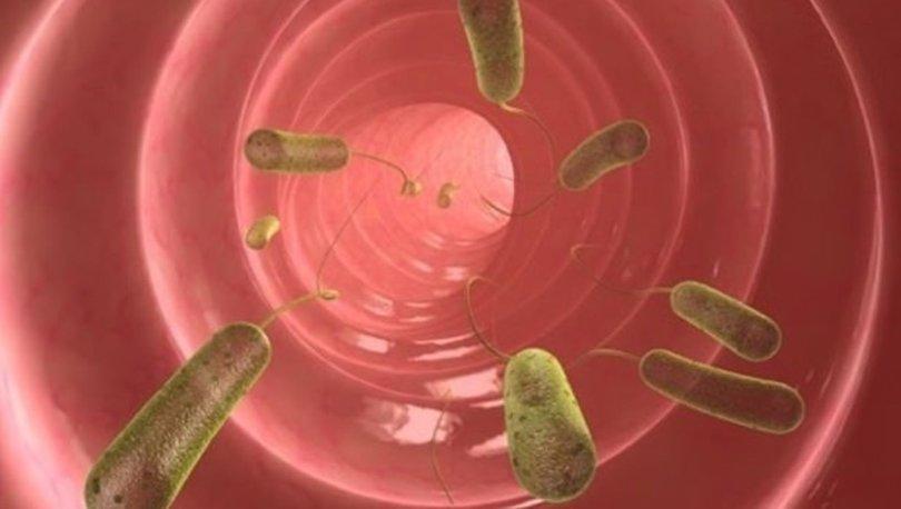 giardia paraziti tedavisi papiloma carcinoma escamoso