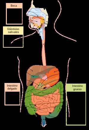 cancer orofaringe causas recurrent respiratory papillomatosis ppt presentation