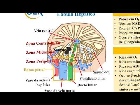 endometrial cancer and smoking vaccin papillomavirus 3 injections