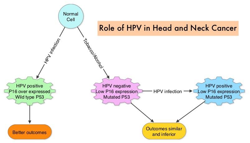 human papillomavirus p16 expression helminth therapy nz