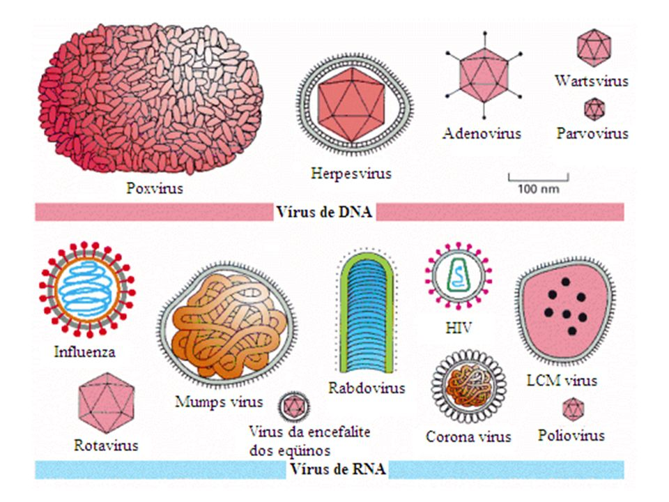 parazitii informatii hpv and skin conditions