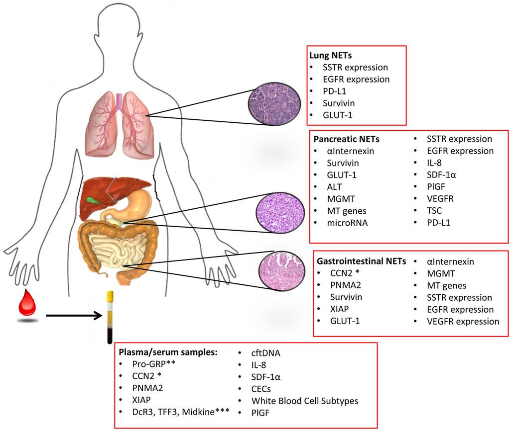 papiloma humano en los hombres sintomas cdc hpv head and neck cancer