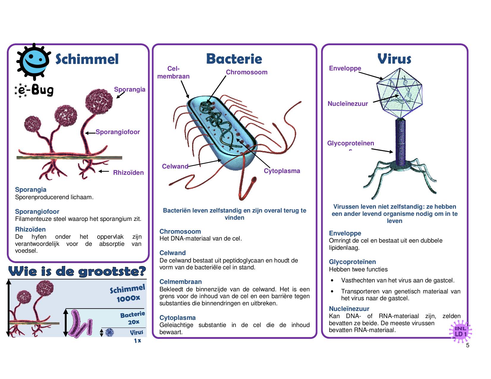 bacterie of virus negi la semne pentru femei