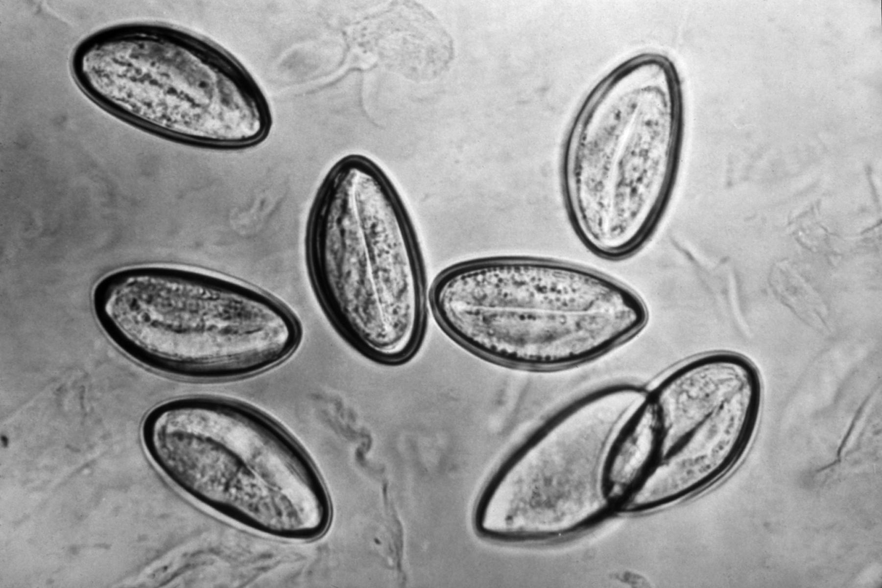 human papillomavirus laryngeal cancer uterine cancer white blood cells